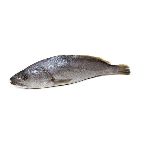 A fresh Mushka fish of Arabian sea ready for online seafood delivery in Pakistan