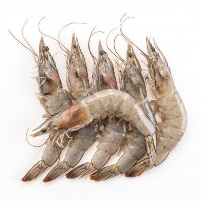 Beautiful fresh medium prawns in Pakistan